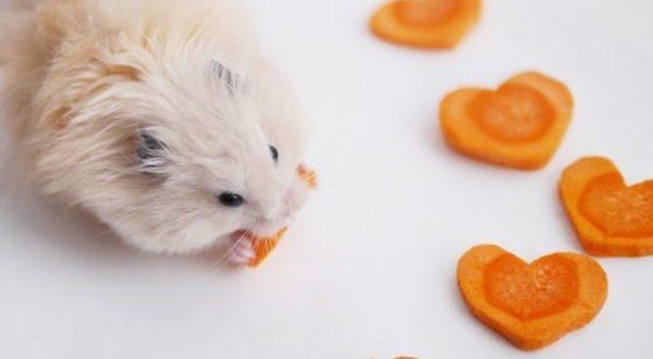 Можно ли хомякам морковь?