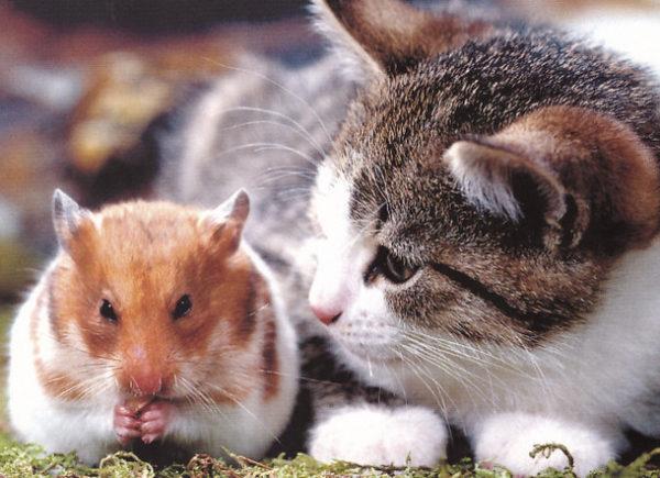 Кот и хомяк в одной квартире