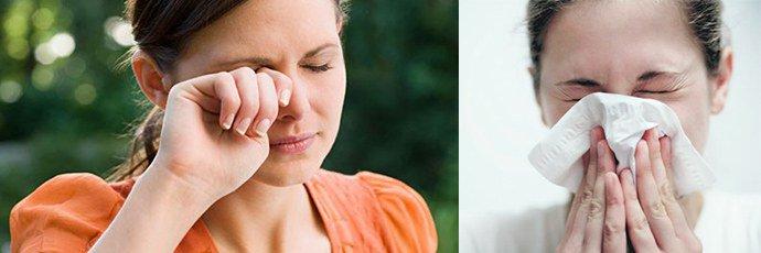 Аллергия на хомяка