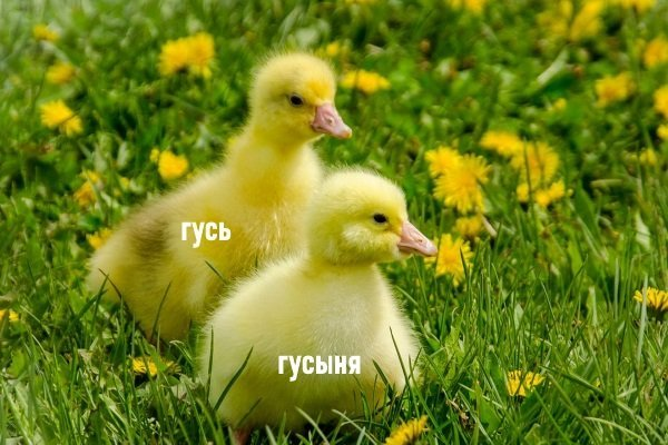 Гусята