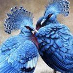 Самые красивые голуби